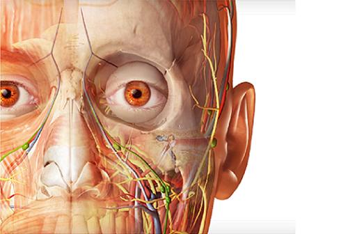 Nouveauté  : Atlas d'Anatomie Humaine - Visible Body