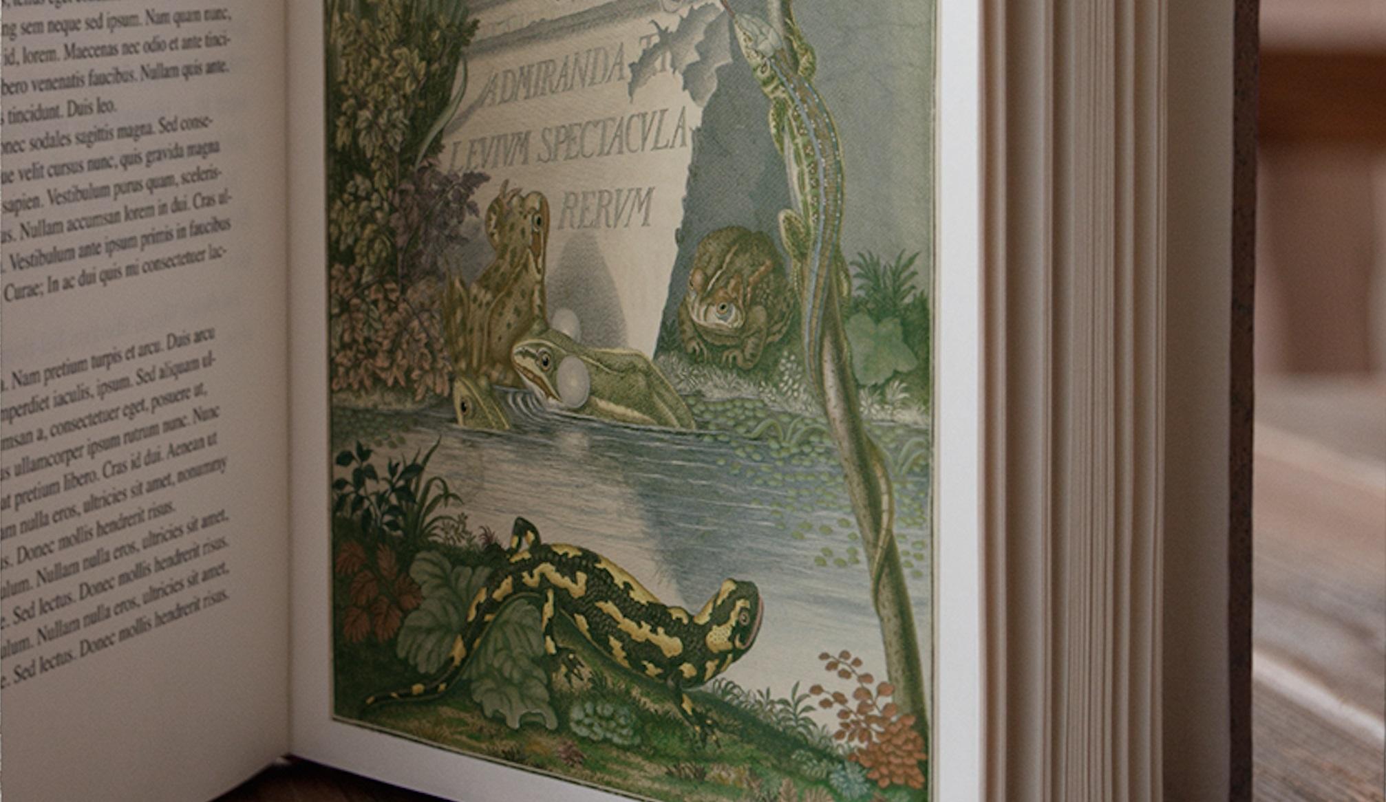 Les Grenouillades de Tomi Ungerer : lumière sur un ouvrage ancien remarquable